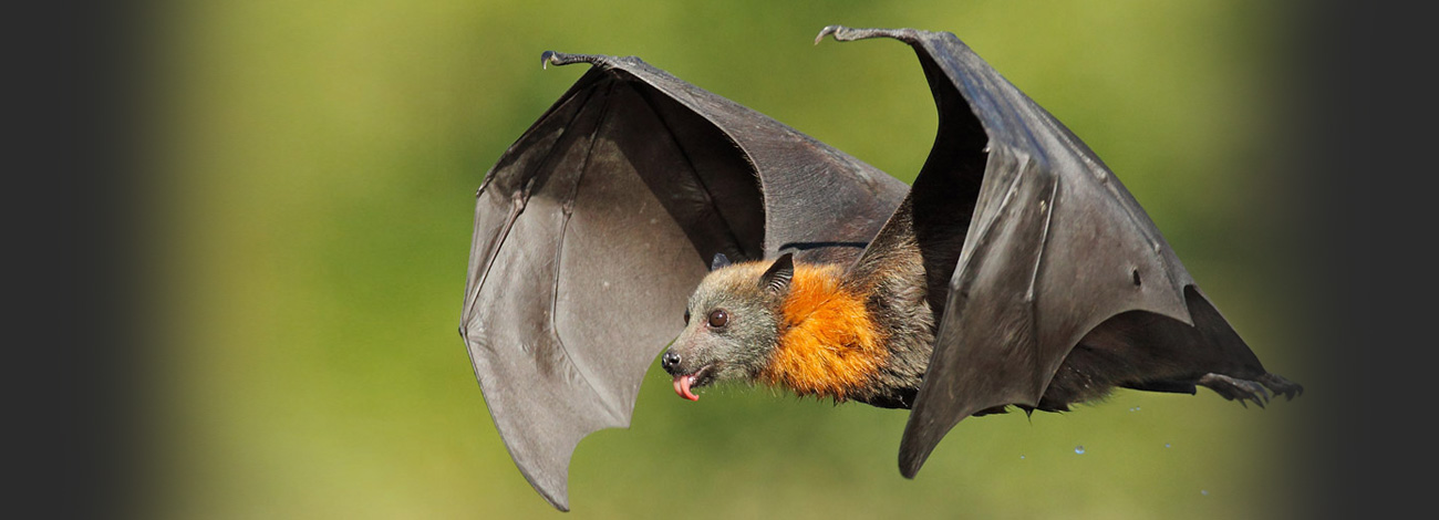 bat bites and their impact pest removal guide