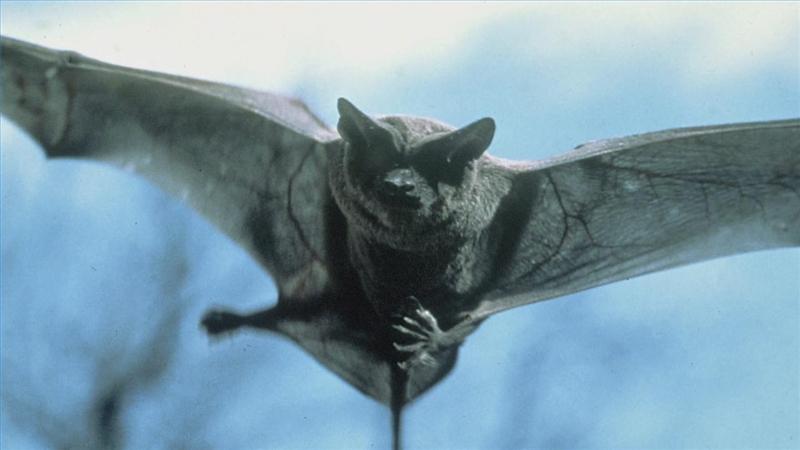 eradicate_bats