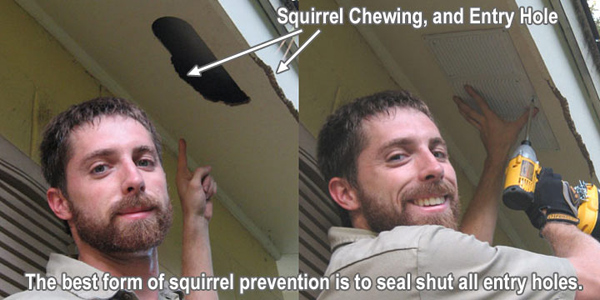 squirrelprevention