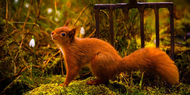 squirrel_garden