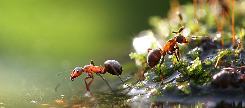 water-ants